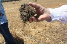 Organic matter is the building block of sustainable and profitable crop production.