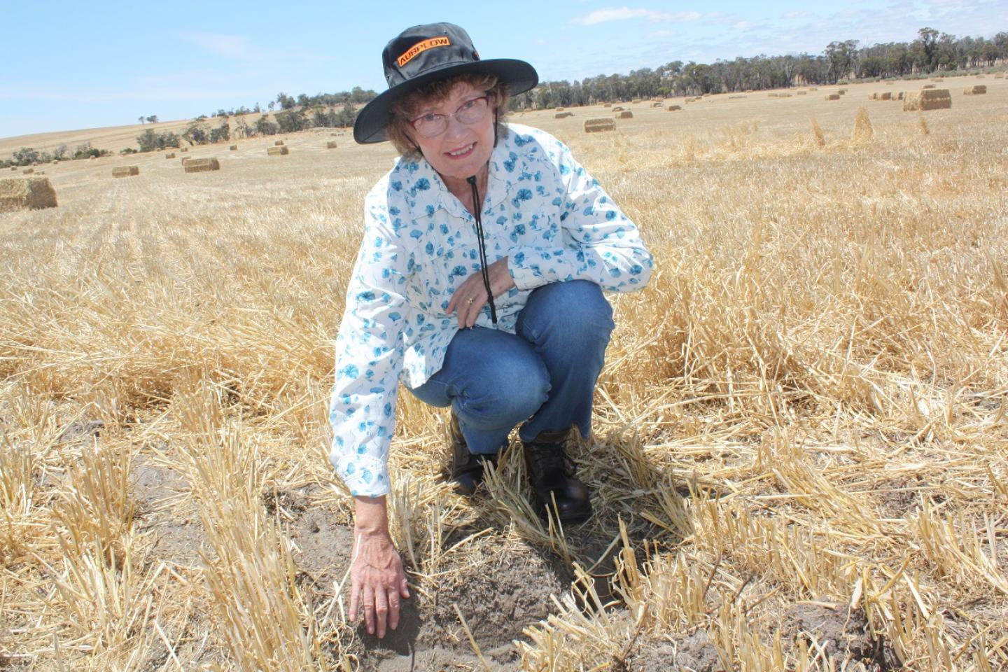 Former CSIRO scientist and microbiologist Dr Margaret Roper … cultivation can reduce organic matter and water-holding capacity in the soil.