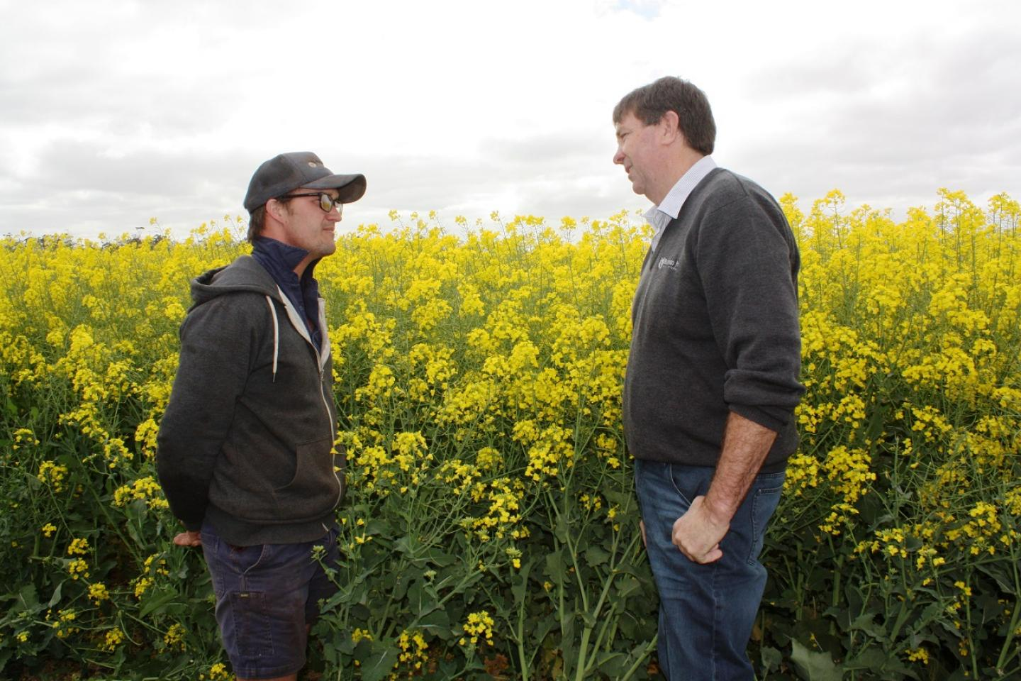 "Cranrook farmer Theo Cunningham (left) and Burando Hill salesman Michael Kowald in front of a healthy GD53 canola crop which was established in April . ""We can achieve these sort of crops more consistently now we have a ProTrakker linked to a DBS and liquid injection,"" Theo said."